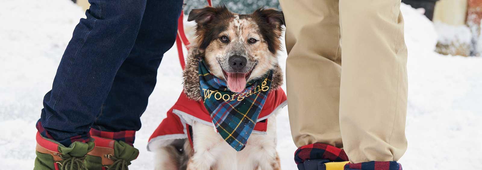 Dog Jackets:  Do They Really Need Them?